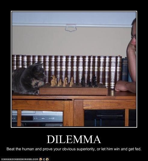 chess dilemma games - 3321351680
