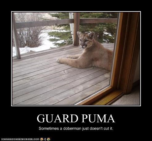 GUARD PUMA Sometimes a doberman just doesn't cut it.