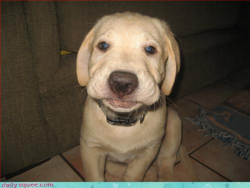 dogs face puppy - 3322888704