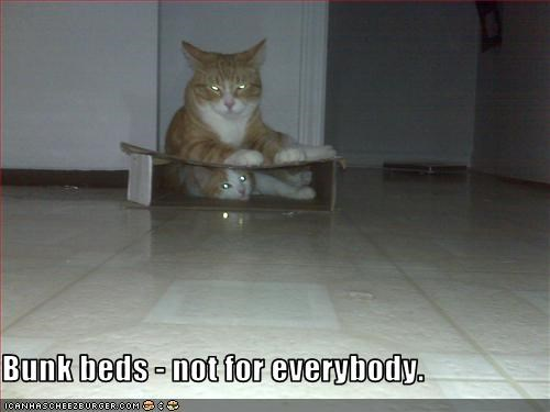 bed box friend sharing - 3323209216