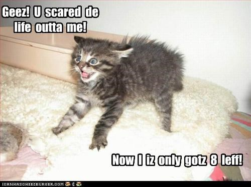 cute,kitten,scared