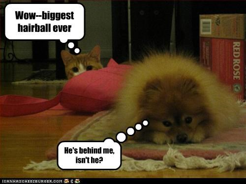 Wow--biggest hairball ever He's behind me, isn't he?