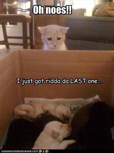 Oh noes!! I just got ridda da LAST one...