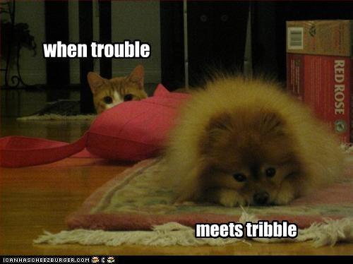 when trouble meets tribble