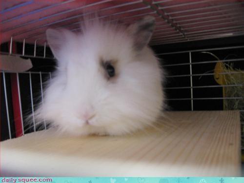 bunnyc cute easter - 3328133888