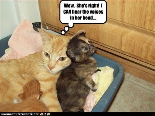 crazy cute kitten voices - 3328391168