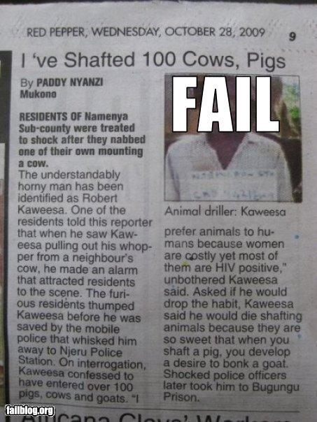 animals bad idea cows failboat pig shafted - 3329045504