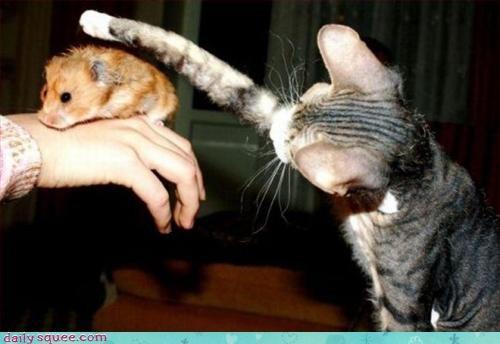 cute hamster kitten - 3331127296
