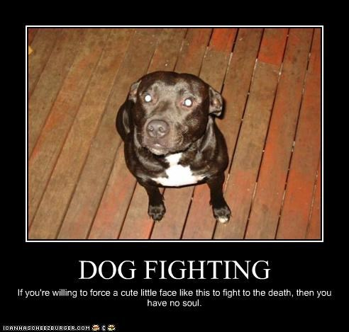 dog fighting Hall of Fame pit bull Sad - 3331555072