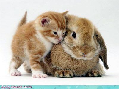bunny cat kitten - 3332350976