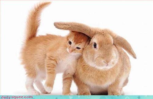 bunny cute kitten - 3332366592