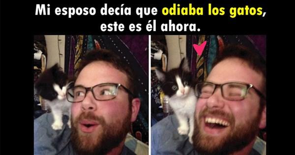 gente que ama los gatos