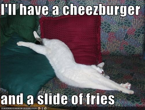 Cheezburger Image 3333643776