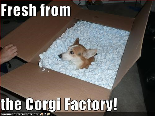 box,corgi,factory,fresh,new,packing peanuts,shipping
