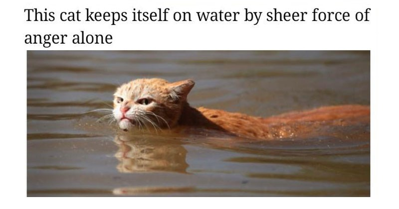 Collection of funny memes about angry hurricane harvey cat.