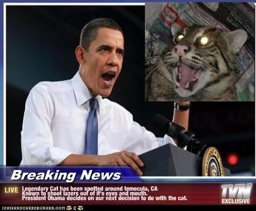 Breaking News - Legendary Cat has been spotted around temecula, CA