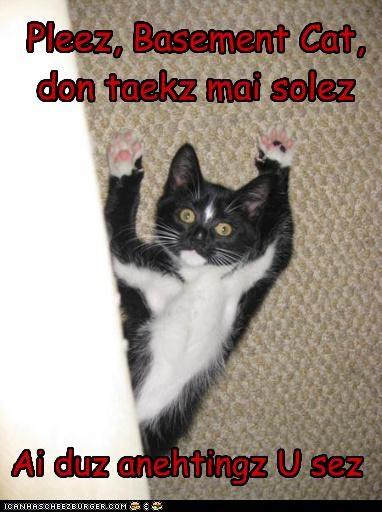 Pleez, Basement Cat, don taekz mai solez Ai duz anehtingz U sez