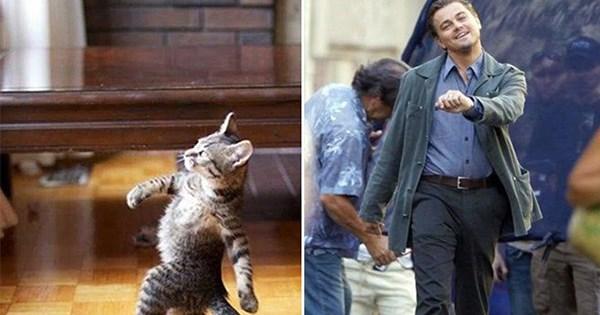 gatos parecidos celebridades