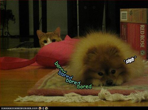 bored bored bored bored * sigh *
