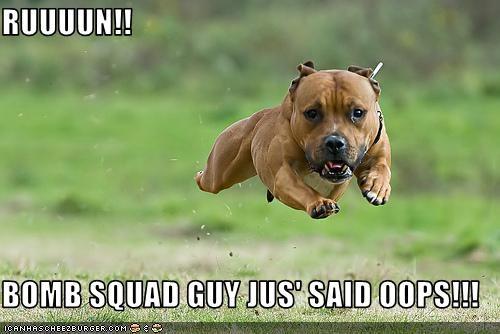 american staffordshire terrier,bomb,bomb squad,FAIL,oops,pit bull,pitbull,run,running