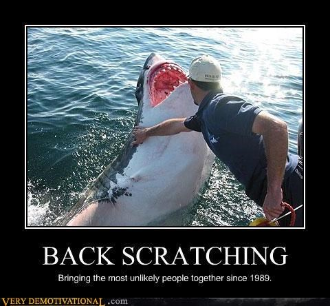 wtf,sharks,back scratching