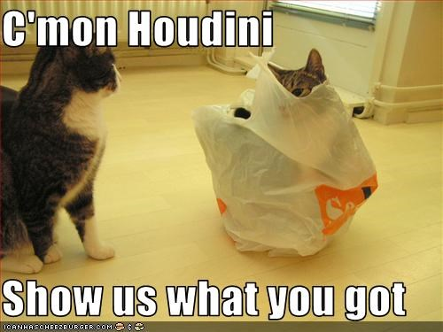 bag,houdini,magic