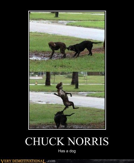 wtf fight chuck norris dogs