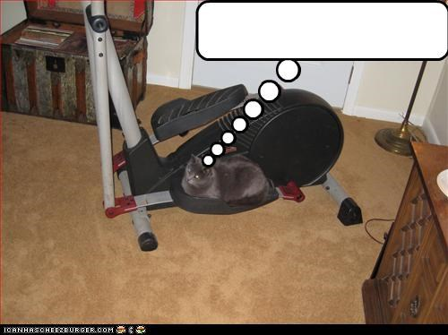 Cheezburger Image 3339811584