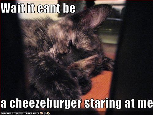 Cheezburger Image 3339987200