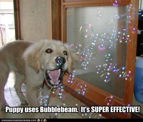 Puppy uses Bubblebeam. It's SUPER EFFECTIVE!