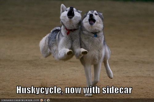 husky motorcycle running sidecar - 334091520