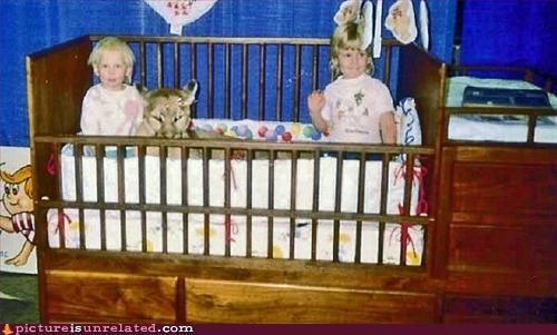 Cats,childhood,kids,mountain lion,wtf