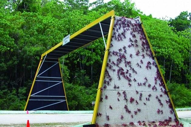 Amazing animal bridges from around the world