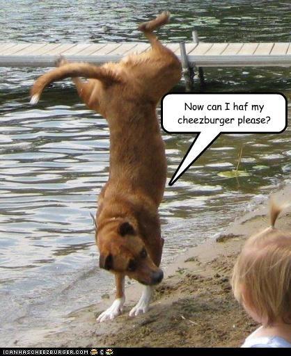 Cheezburger Image 3342577920