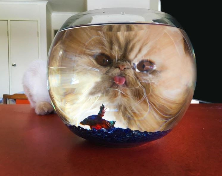 photoshop battle of a cat staring in a fish bowl