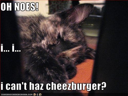 Cheezburger Image 3342893824