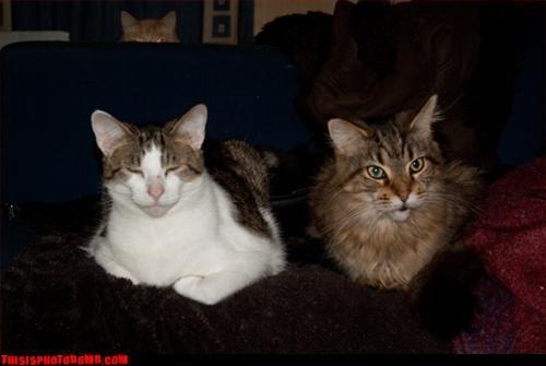 Animal Bomb Cats cats are evil creeper horizon - 3342997248