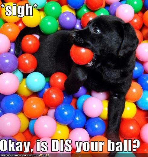 ball,choices,depressed,discouraged,fetch,guessing game,puppy
