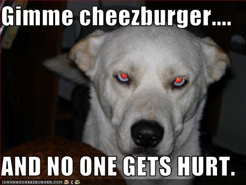 Cheezburger Image 3343353856