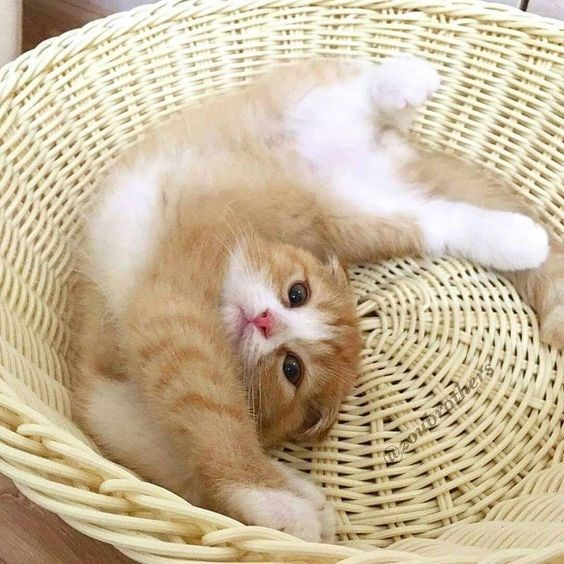 a cute kitten stretching and a list of cute animals stretching