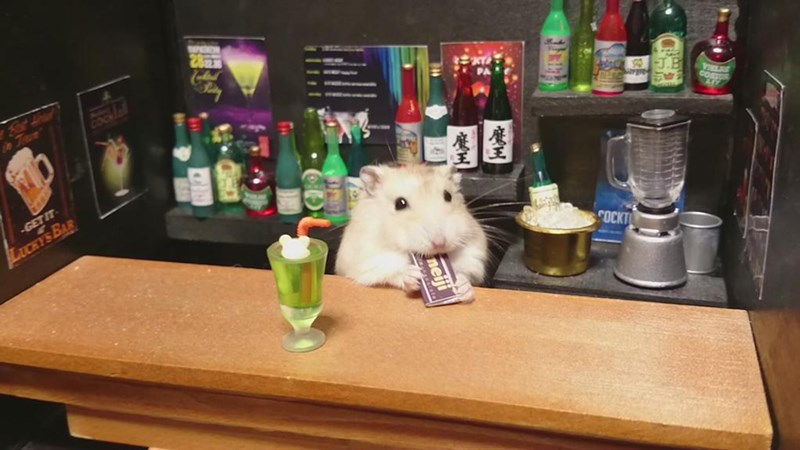 Hamsters as bartenders