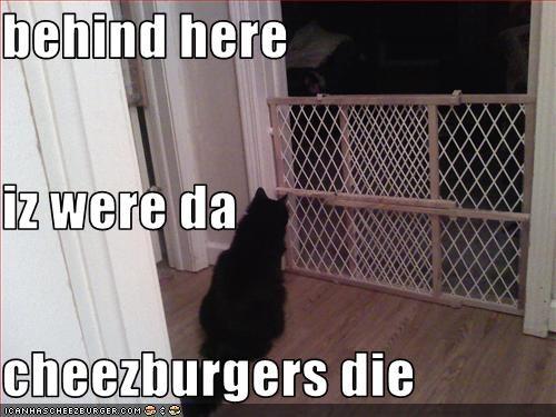 Cheezburger Image 3344117504