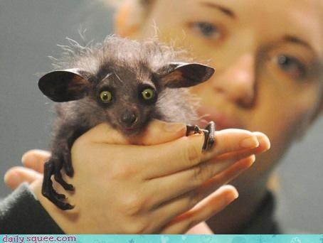 cute rat ugly - 3344165632