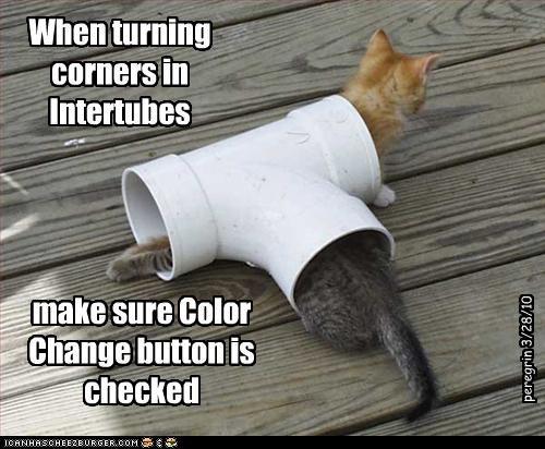 color cute intertubes kitten - 3344176384