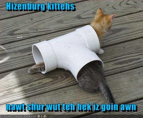 Cheezburger Image 3344201728
