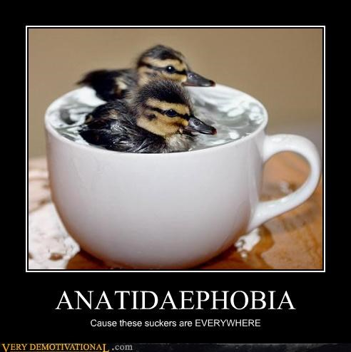 ducks,horrifying,phobia