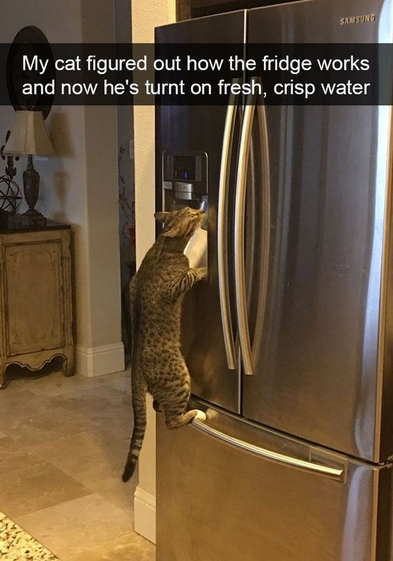 a list of gifs that show cats have tricks up their sleeves