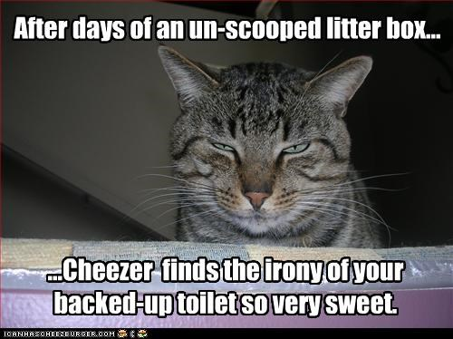 ironic litter box toilet - 3345730048