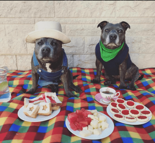 adorable pit bull brothers | cute photo of two dogs one wearing a wicket hat and the other a green bandanna around its neck sitting side by side on a colorful blanket