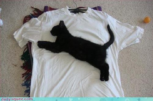 cat kitten puma - 3348087808